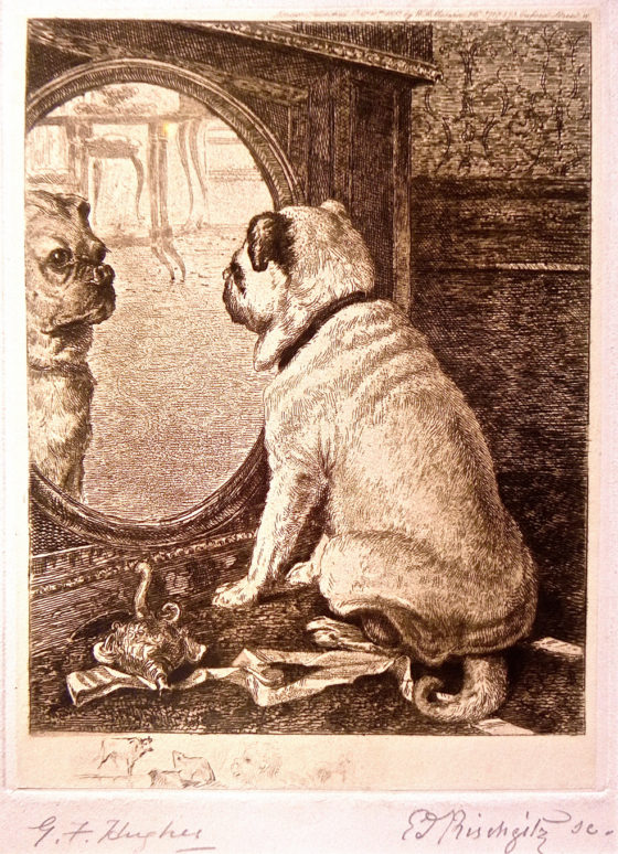 dog-and-mirror